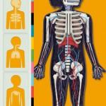 Menneskets krop Lite